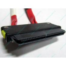 SATA-кабель для корзины HDD HP 451782-001 459190-001 для HP ML310 G5 (Брянск)